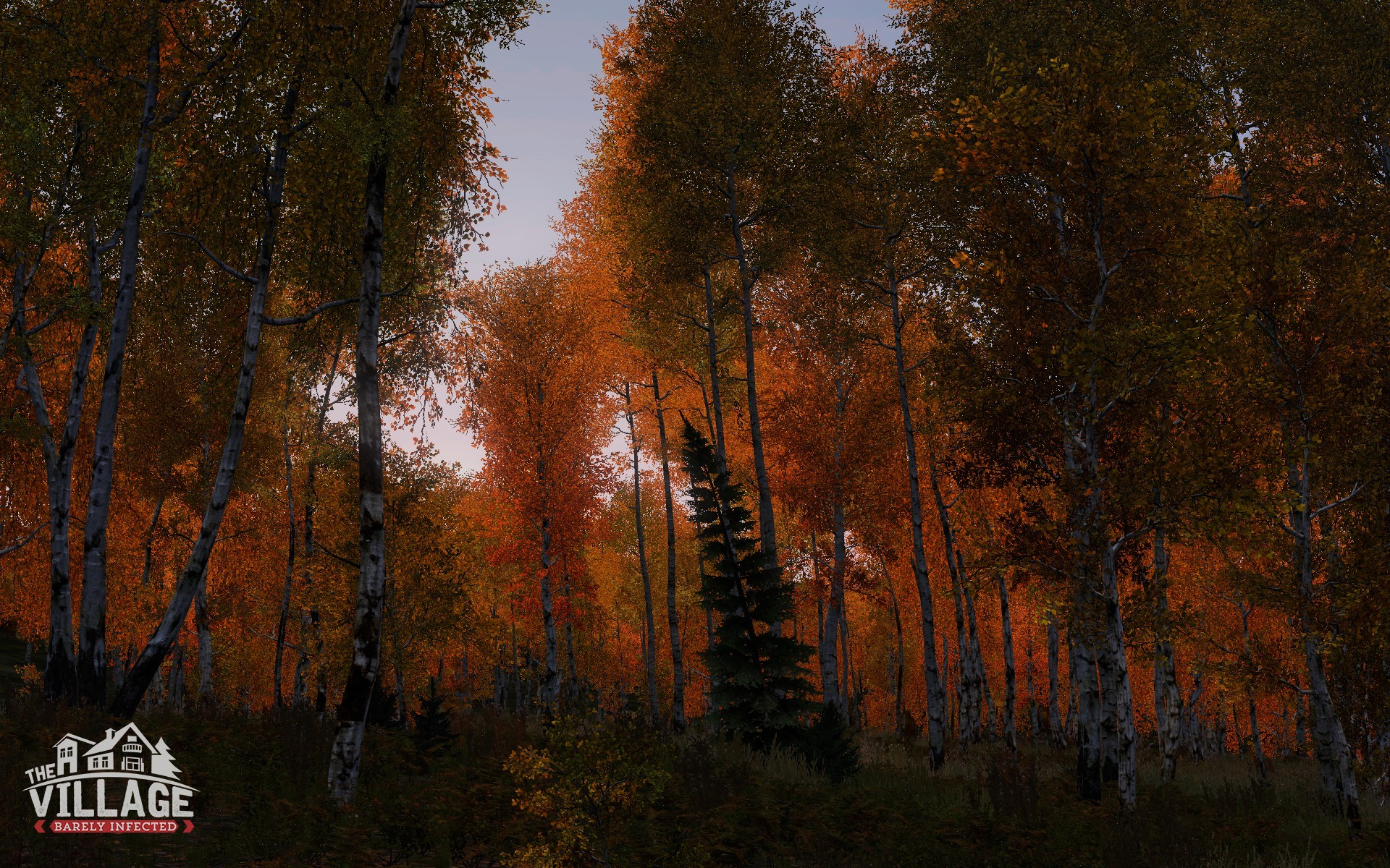 Birch forest in late daylight, west of Tisy radar station - Barely