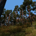 Forest in DayZ... I need to find myself a tent now!